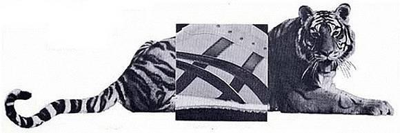 """灌篮高手里的三井寿都在穿鬼冢虎,Nike都要叫它声""""爷"""""""